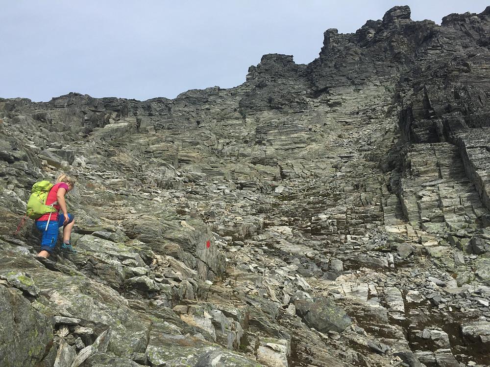 Rødmerkinga opp mot høyre, vi fortsatte rett frem forran Linn Beate og fulgte varder mot toppen