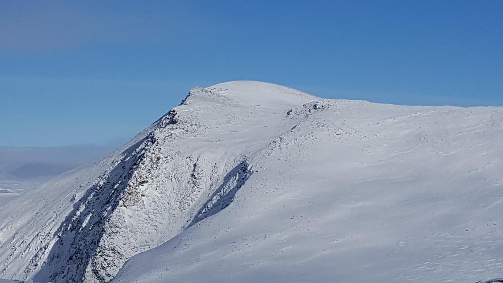 En moskusflokk kan skimtes til venstre for toppen på Einøvlingseggen