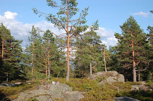 Toppen av Skurufjell