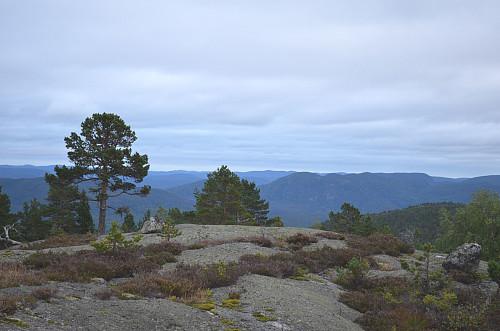 Fra Lyngbergvarden sør på toppen