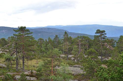 Utsikt fra Gautilnuten
