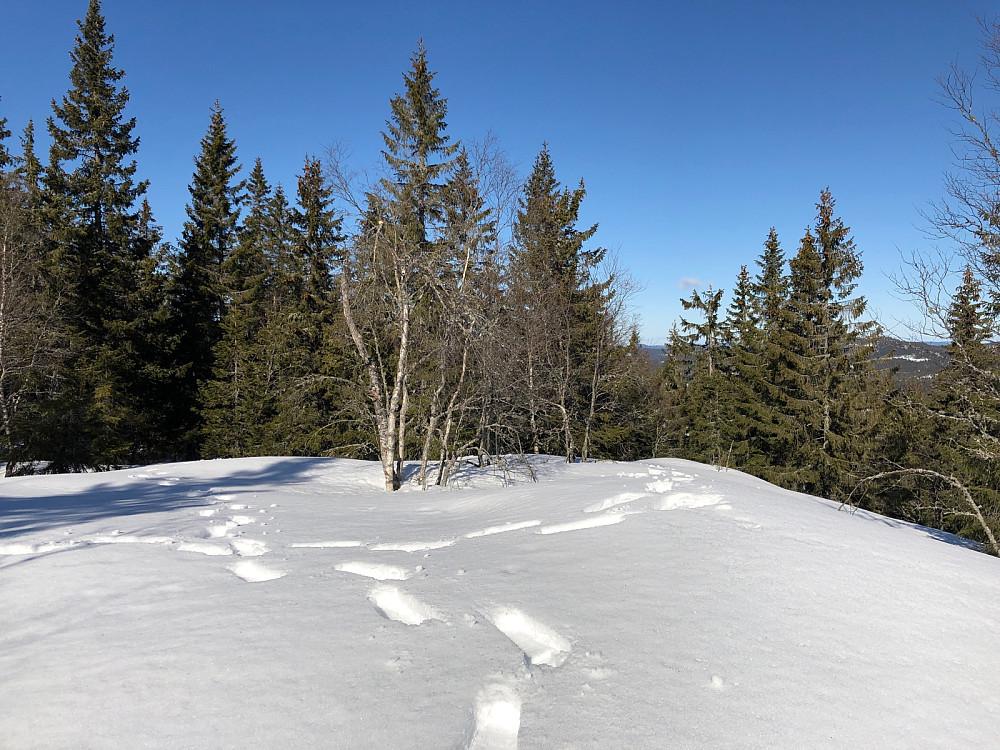 Pershusfjellet, med skog.