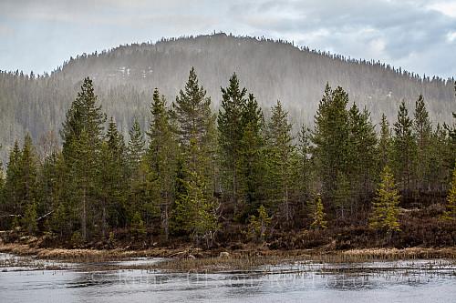 Snøvær på gang langs Arebuelva. Elgsfjell i bakgrunnen.