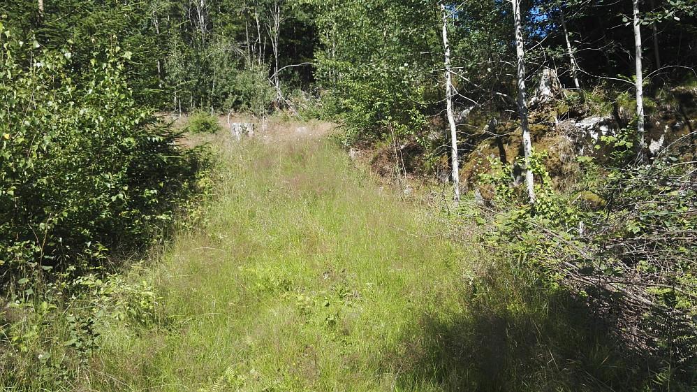 Fant en gammel skogsvei på returen. Mye høyt gress, som samlet en del flått på buksa.