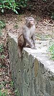 Det var litt apekatter underveis. Disse må IKKE mates.