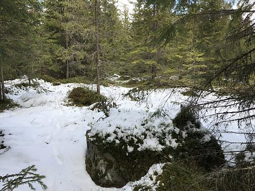 Det høyeste punktet på Elsåsen ligger på en liten åpen plass midt inne i tettkrattet