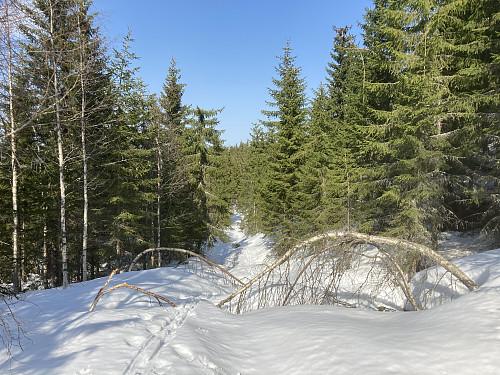 Det var mye hindringer langs skogsveien oppover mot skaret