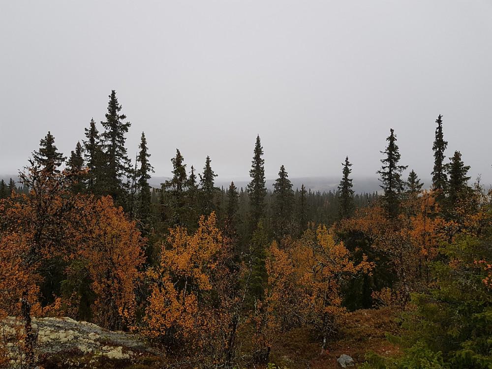 Utsikt fra toppen