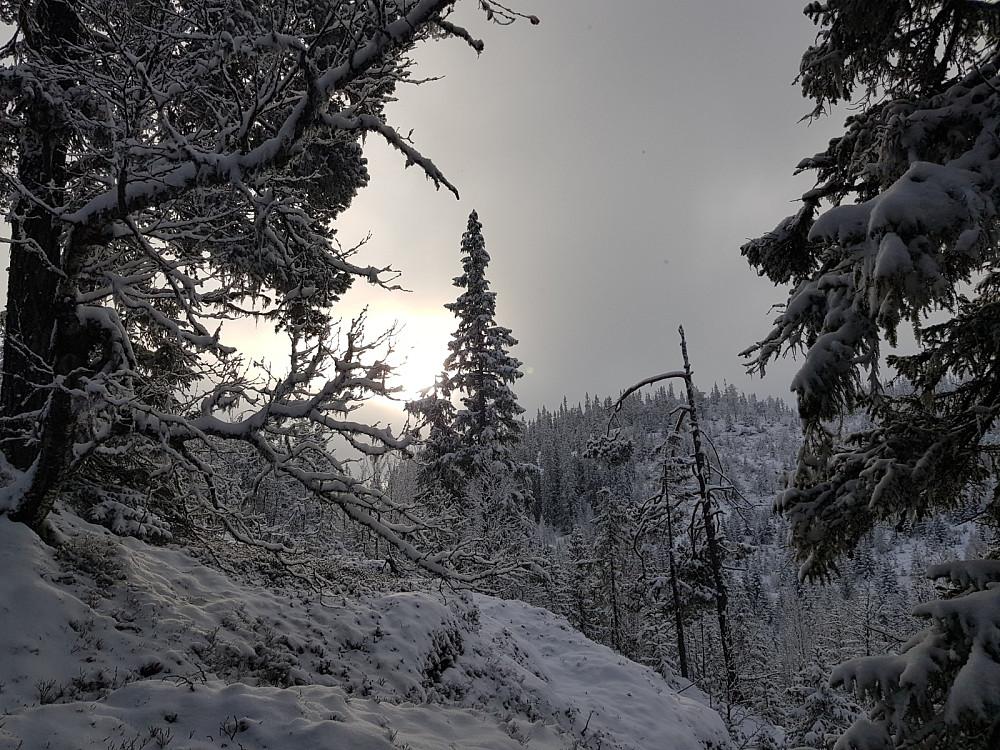 Vinterlig på vei til Kattuglehøgdi