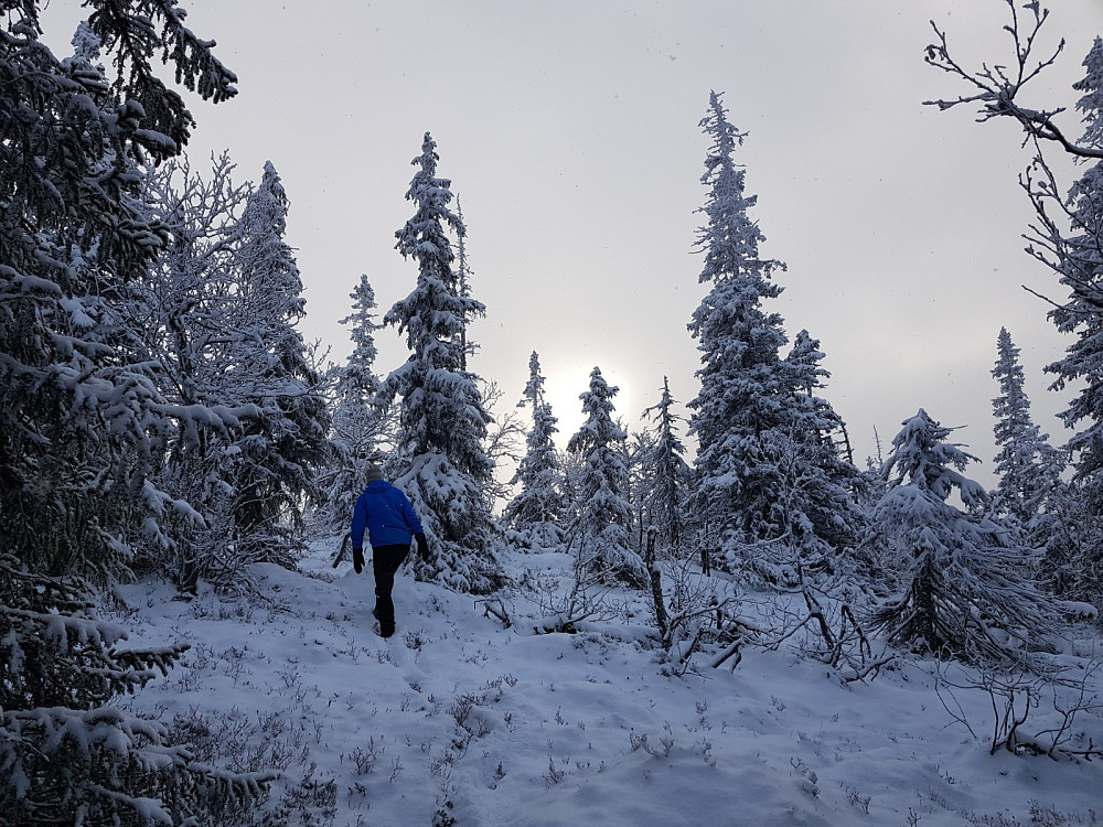 Hans Thorvald på vei til Kattuglehøgdi