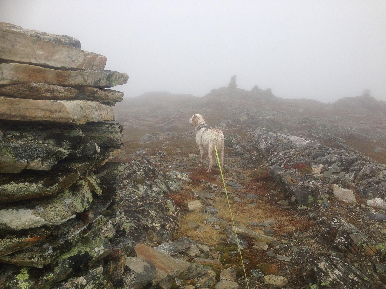 Turartikkel Trevardetoppen 10 Pa Topp Tromso Skrevet Av