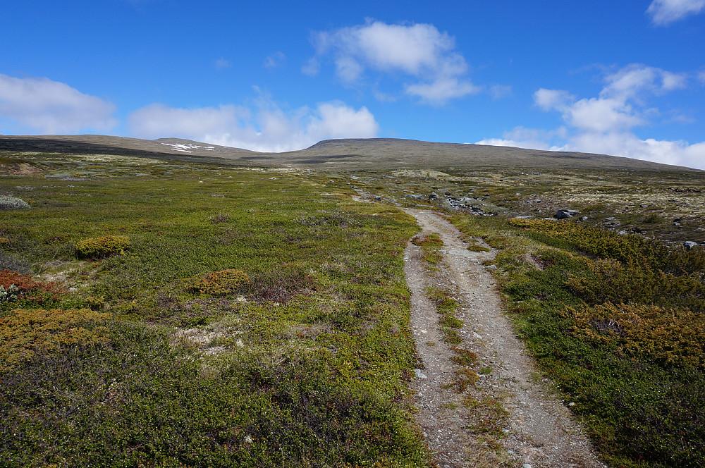 Fint å følge stien oppover etter Blesebekken.