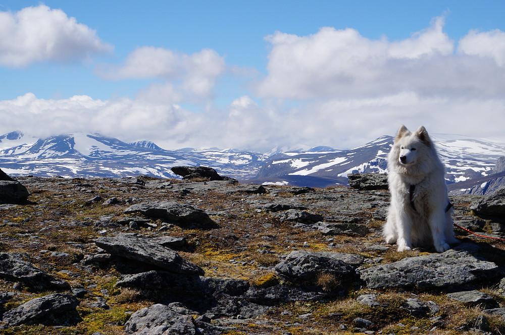 Tundra synes det er helt greit turvær.