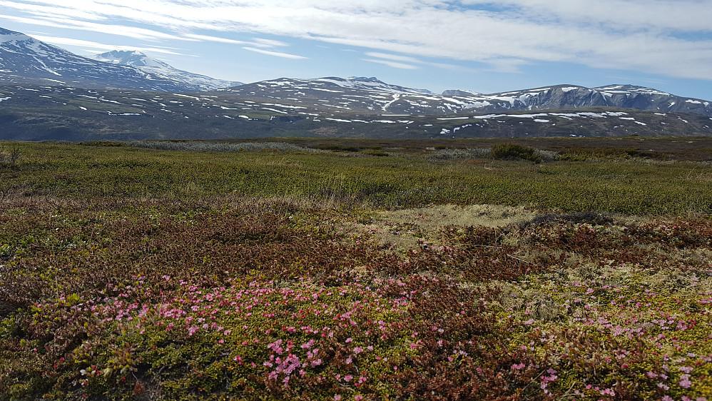 De tre Knutshøene regnes som Nord-Europas rikeste plantefjell, det er registrert 420 planter i området.
