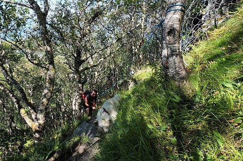 Tett skog men greit med skygge i varmen.