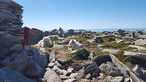 Godt å slappe av på Storefjellet i sommervarmen men de lengter etter vinteren( det gjør e å)