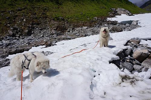 Godt for hundene å få avkjølt seg i varmen.
