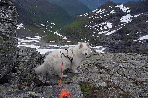 Regndalstind sørvesteggen - klyvepunkt  Tundra lurer på om jeg kommer ned...