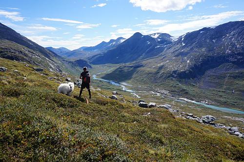 Ser ned til Langfjelldalen.