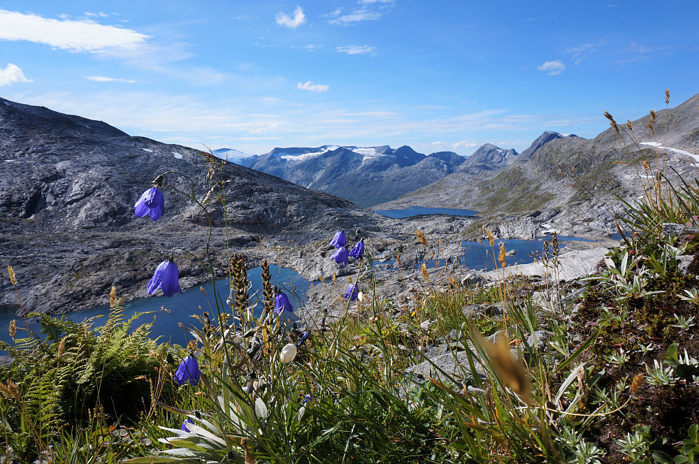 Mye fint å hvile øynene på...flora og fjell.