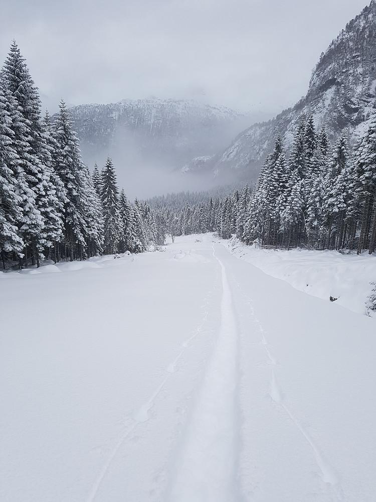 Fin snø. Fole fin skogsvei.