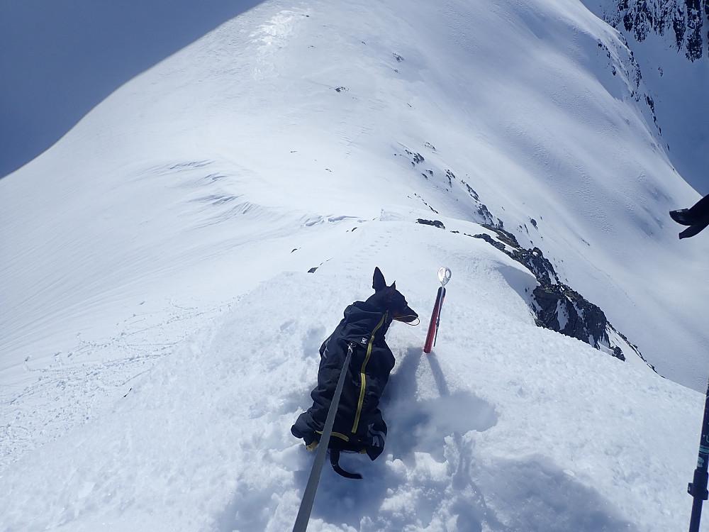 Ylva fornøyd med å ha bakset seg opp den bratte ryggen til topp 1362.