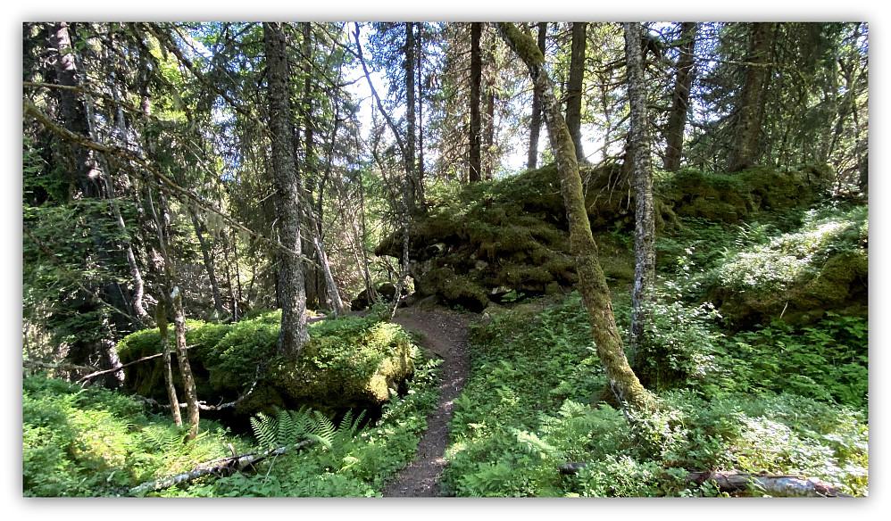 Her under bergrabben i skogen skjuler det seg en trimpost.
