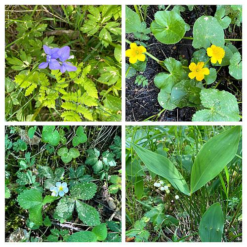 Mange forskjellige blomstrer opp i lia her.