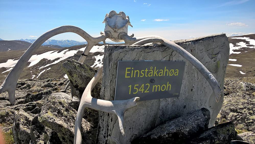 Einståkåhøi
