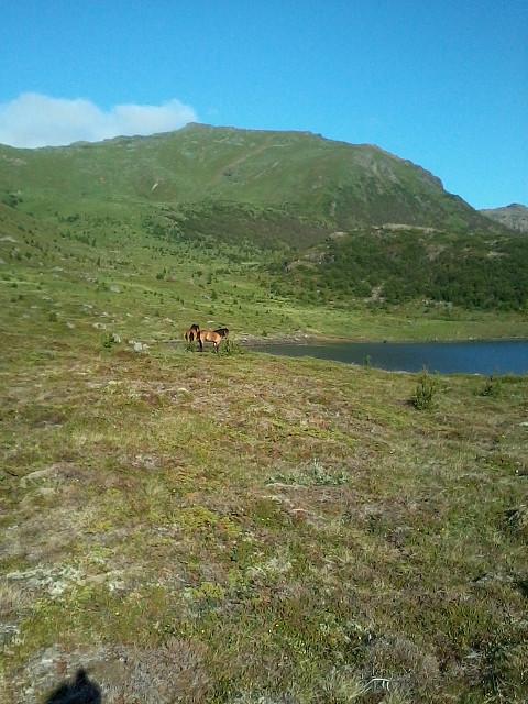 Hestene ved Ravatnet.