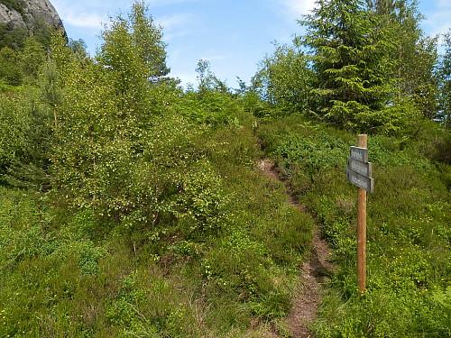 Godt merka sti i sør- og vestsida opp til Gullbergknuden.