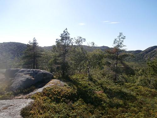 På Ørnehei med Stakksteinsliknuten mellom trærne litt t.h. for midten.