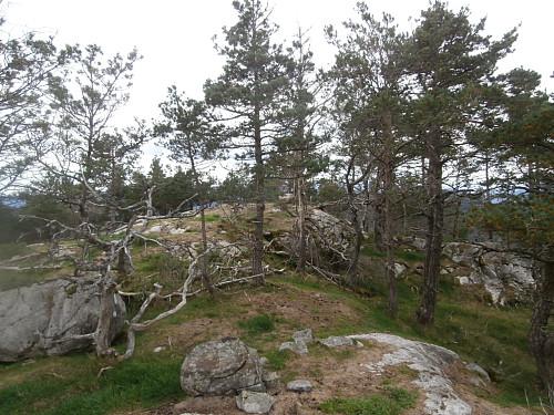 På toppryggen av Kyrkjefjellet 455.