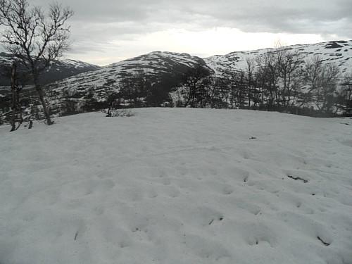 På Hommen som har snødekt topplatå. Ser austover mot Løyningsheii.