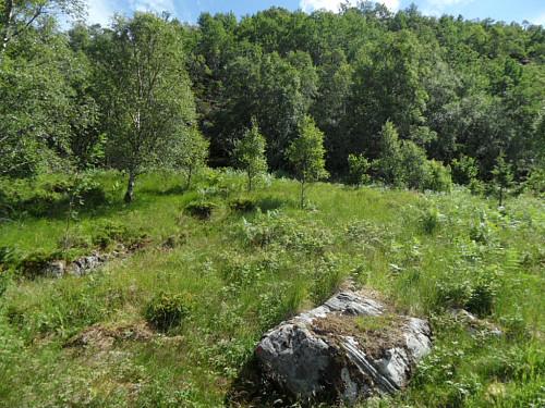 Mot Ørnafjellet der stien er delvis skjult av høg vegetasjon.