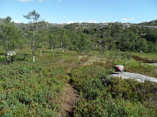 Sti i området vest for Holmavatnet.