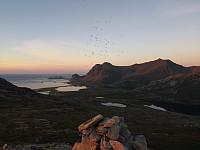 Små fluggu på Bufjellet