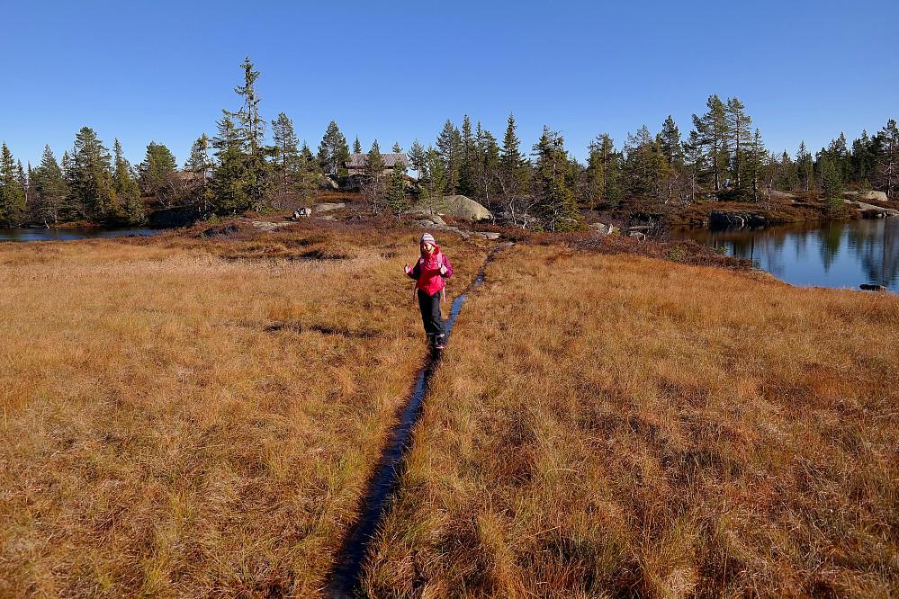 På vei tilbake mot Sveinsbu, som ses i bakgrunnen innimellom trærne. Den tynne stripen Frida står på, er stien. Her ligger det planker i bunnen, som nå var dekket med vann.