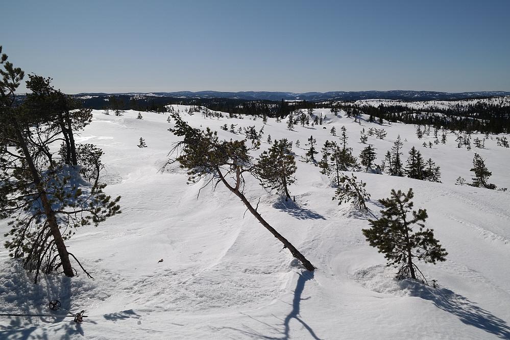Utsikt sørover fra toppen av Evjuseterfjellets trig.punkt (758).