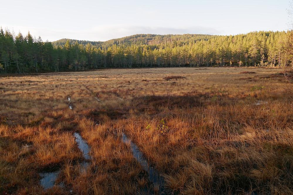 Myra ved høyde 445. I bakgrunnen er Elgstjernåsen (609) midt i bildet, med Gravaråsen (577) til venstre.