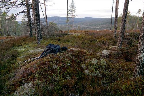 På Elgstjernåsen (609). Ganske åpent på toppen med utsikt mot nordvest.