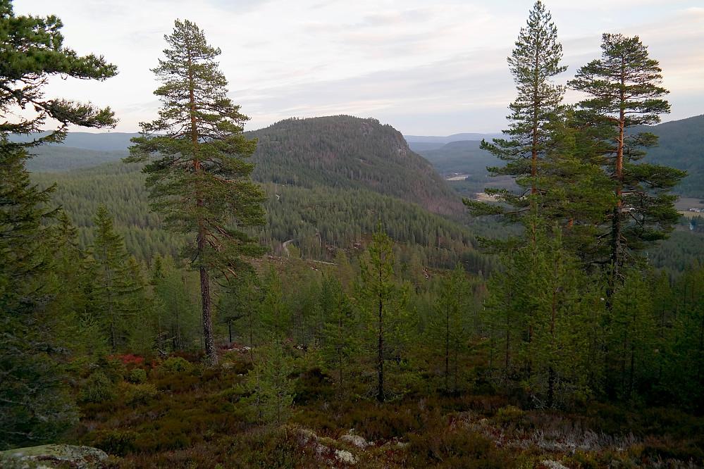 Her er jeg på vei nedover i skogen fra Gravaråsen (577) og ser Jondalsåsen (579) mellom trærne.