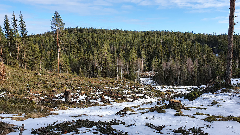 I øvre del av hogstfeltet, med utsikt mot Malmerberget (391).