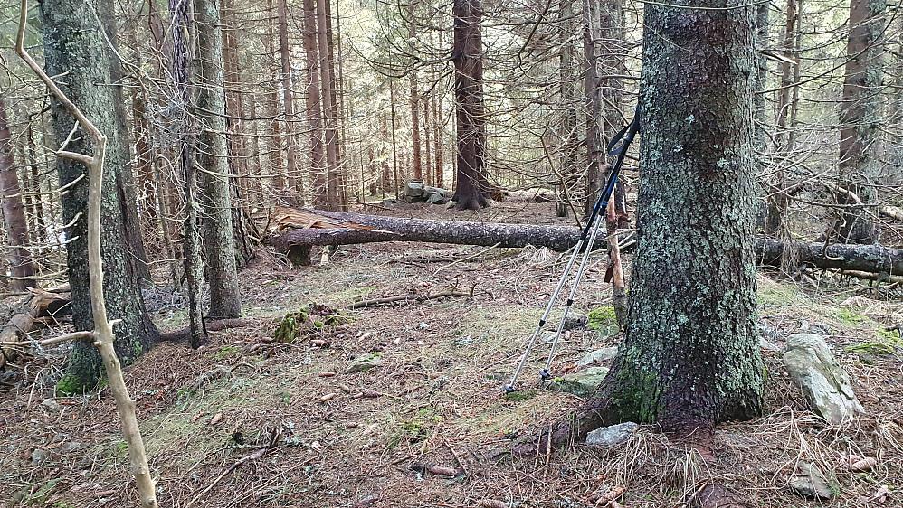 I granskogen på toppen av Vangen (374).