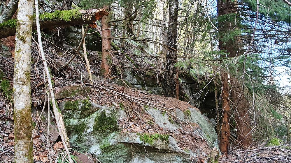 Opp mellom trærne her kom jeg meg bort til nordryggen på Grasås (356).