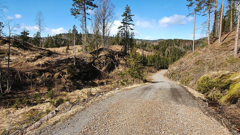 Jeg rusler på grusveien gjennom hogstfeltet på vei mot dagens siste høyde, Sørøst for Sagstua (202), som er gresskollen litt lengre bak midt i bildet.