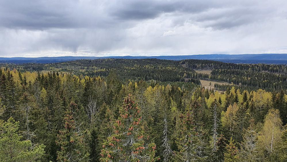 Mot sørvest fra utsiktstårnet på Vardehøgda. Åsen nærmest i bakgrunnen er Hasleråsen.