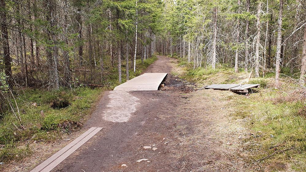Stien som går forbi toppen av Hasleråsen (348) må være mye brukt. Her er jeg sør for toppen.