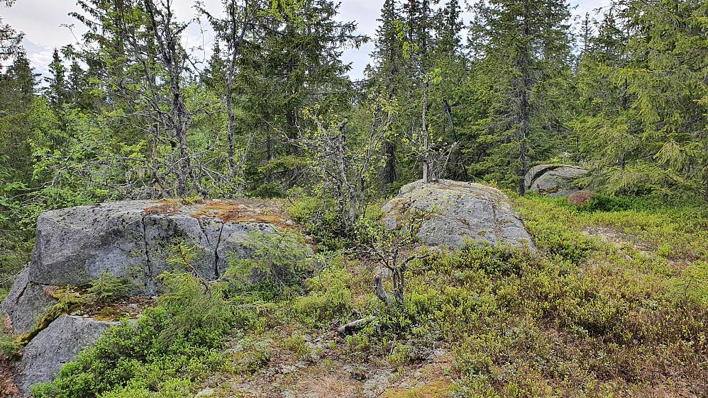 Høyeste punkt på Liskampen (687) er muligens den midtre av disse bergknausene.