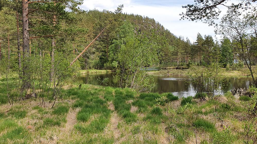 På Landtangen, hvor man så vidt kan se traktorsporene i gresset. Ikke langt ned til vannflaten på Sperillen her... I bakgrunnen er Storøya (254).
